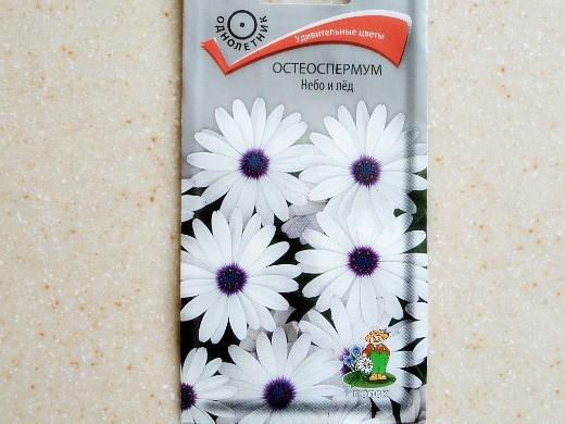 остеоспермум, выращивание из семян и черенками 3