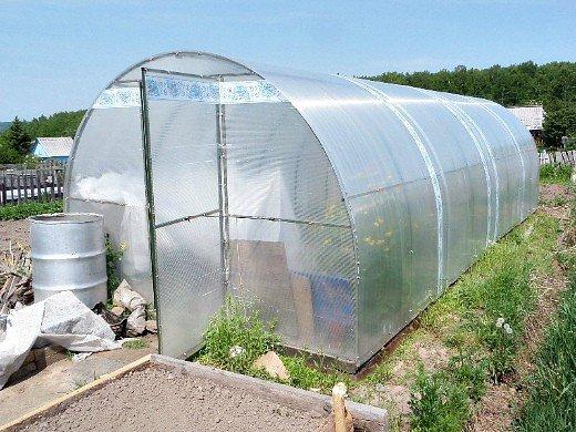посадка и выращивание перцев в теплице из поликарбоната