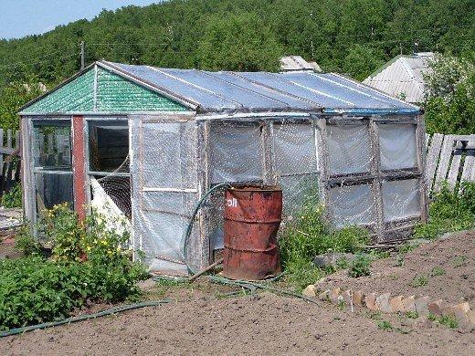 выращивание огурцов в теплице из стекла