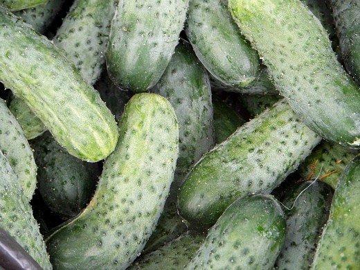 выращивание огурцов в теплице - урожай овощей
