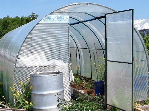 выращивание растений в теплице - весна