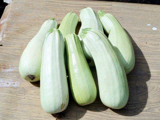 агротехника выращивания кабачков - урожай овощей