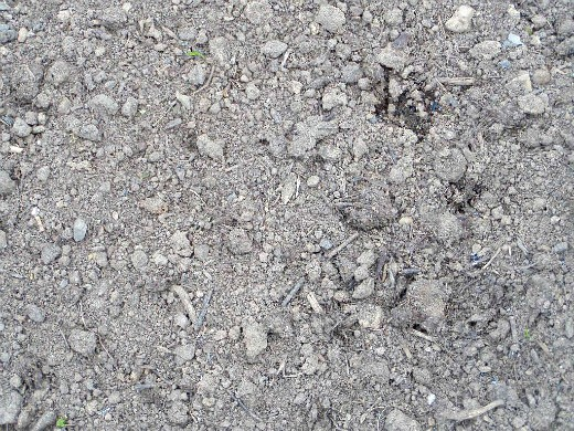 агротехника выращивания огурцов - компостная земля