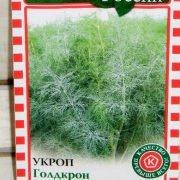 технология выращивания зелени в теплице - укроп голдкрон