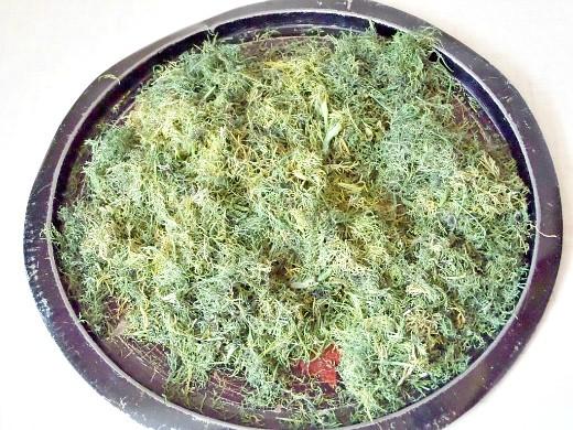 заготовка и хранение зелени на зиму - нарезанный для сушки укроп