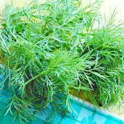 заготовка и хранение зелени на зиму - пучок укропа 1