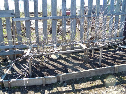 уход за деревьями и кустарниками весной 1-4