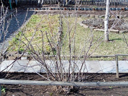 уход за деревьями и кустарниками весной 1-5