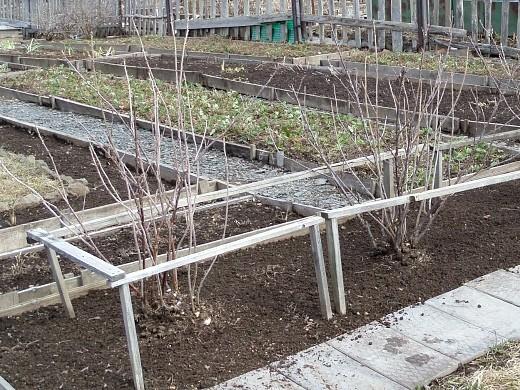 уход за деревьями и кустарниками весной 1-6