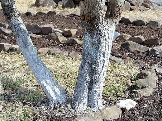 уход за деревьями и кустарниками весной 1-7