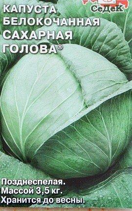 выращивание капусты в открытом грунте - сорт сахарная голова