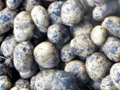 Как хранить картошку в погребе зимой: фото и видео