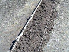 Что посеять и пересадить в открытый грунт и в теплицу в марте
