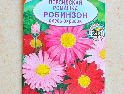 всхожесть семян цветов и овощей - персидская ромашка сорт робинзон