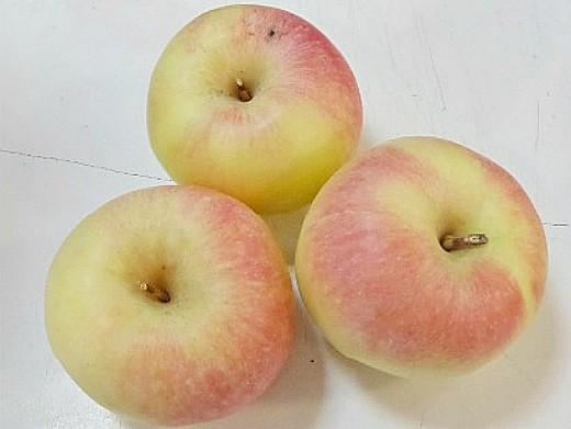 лучшие сорта яблонь с описанием и фото - краса свердловска