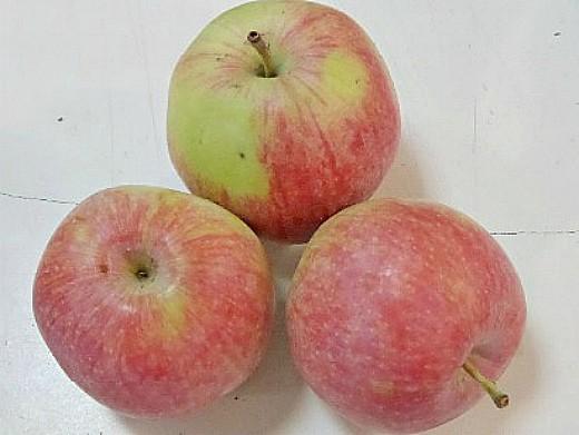 лучшие сорта яблонь с описанием и фото - анис сладкий(терентьевка)