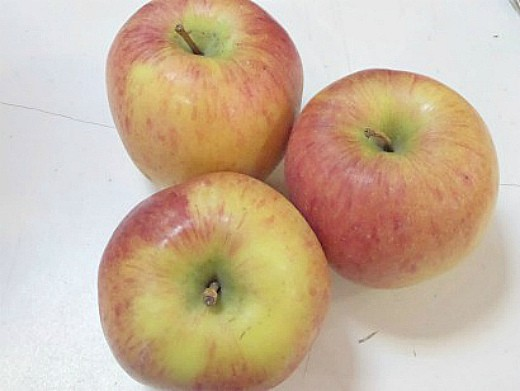 лучшие сорта яблонь с описанием и фото 17