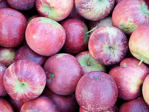 лучшие сорта яблонь с описанием и фото - медуница