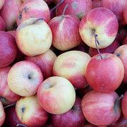 лучшие сорта яблонь с описанием и фото 22