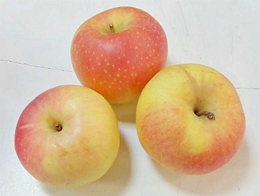 лучшие сорта яблонь с описанием и фото - горнист