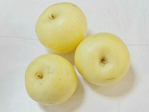 лучшие сорта яблонь с описанием и фото - антоновка
