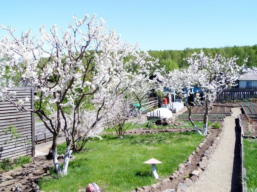 обрезка и формирование плодовых деревьев 1-1