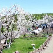 обрезка и формирование плодовых деревьев 1-2