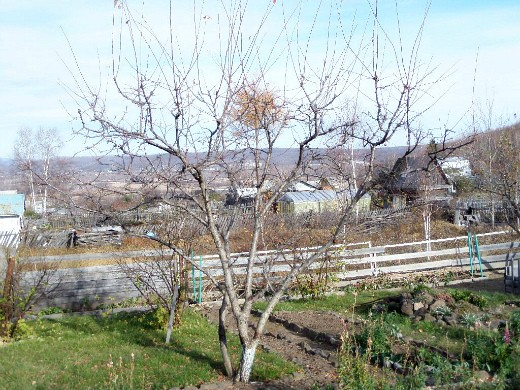 обрезка и формирование плодовых деревьев 1-3