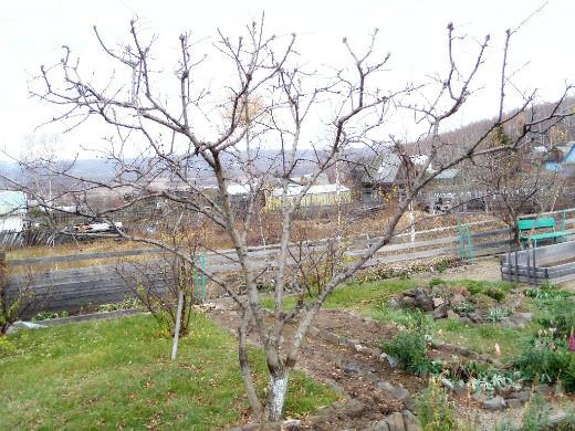 обрезка и формирование плодовых деревьев 1-4