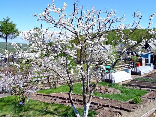 работы в саду и огороде весной 1-1