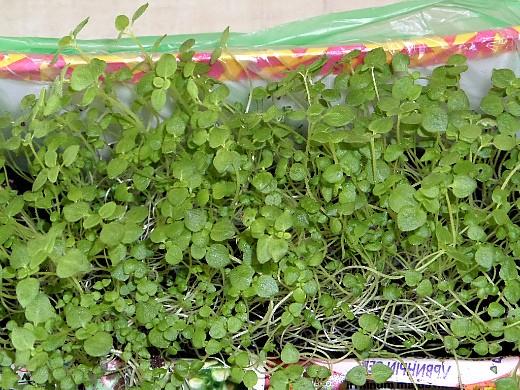 работы в саду и огороде весной 1-10