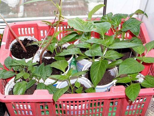 работы в саду и огороде весной 1-11