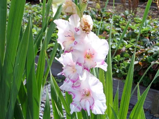работы в саду и огороде весной 1-15
