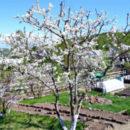 работы в саду и огороде весной 1-2
