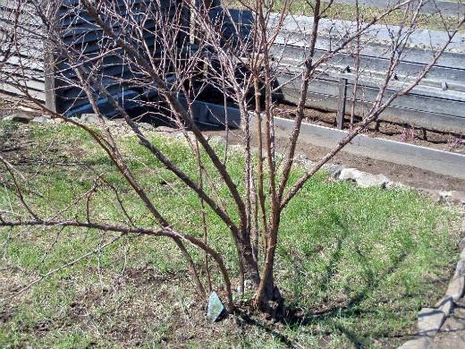 работы в саду и огороде весной 1-4