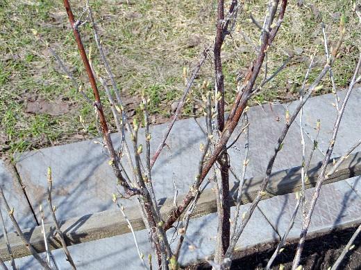работы в саду и огороде весной 1-8