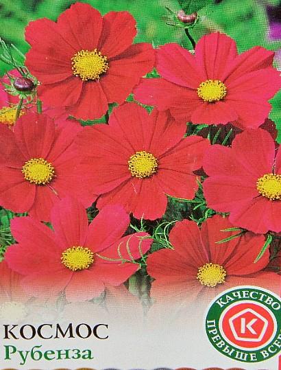 цветы космея, выращивание из семян - семена космос сорт рубенза