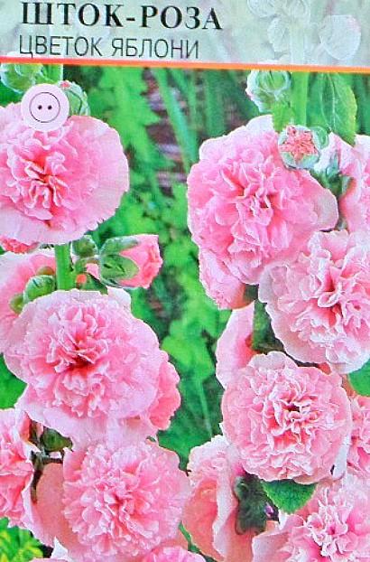 мальва многолетняя, посадка и уход - семена шток-роза сорт цветок яблони