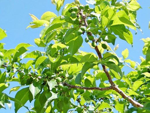 уход за деревьями и кустарниками летом 1-3