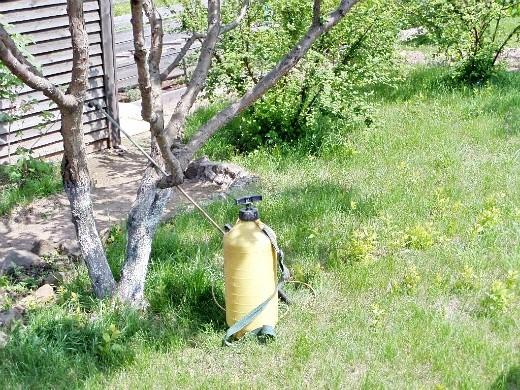 уход за деревьями и кустарниками летом 1-6