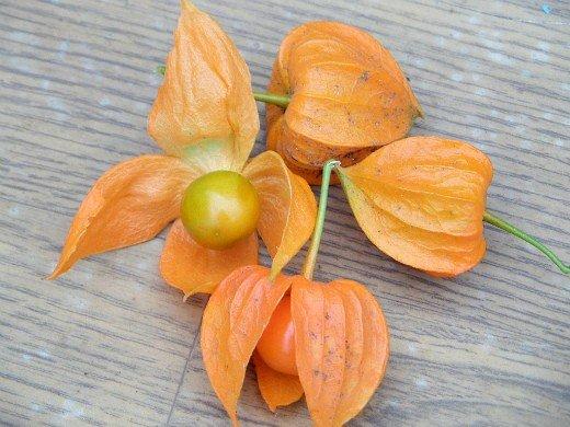 физалис овощной, выращивание из семян - спелые плоды