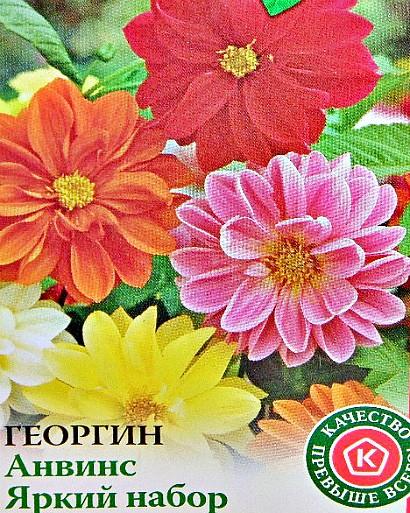 онолетние георгины, посадка и уход - семена сорт анвис, яркий набор