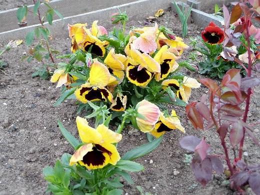 Весенние цветы, названия и описание