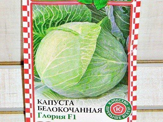 выращивание рассады капусты в домашних условиях - белокочанная семена сорт f1 глория