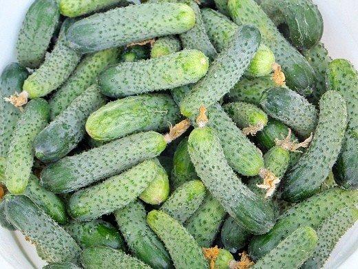 выращивание рассады огурцов в домашних условиях - урожай с грядки