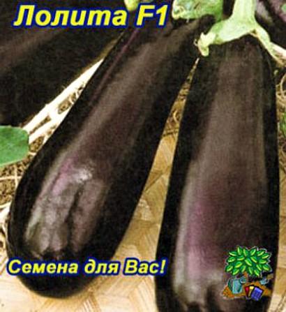 лучшие сорта баклажанов для открытого грунта для разных регионов, лолита f1