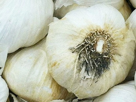 лучшие сорта чеснока ярового, сочинский 56