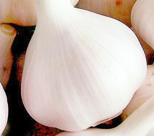 лучшие сорта чеснока озимого, комсомолец