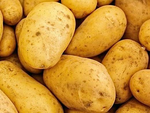 лучшие сорта картофеля с описанием для разных регионов, маламур
