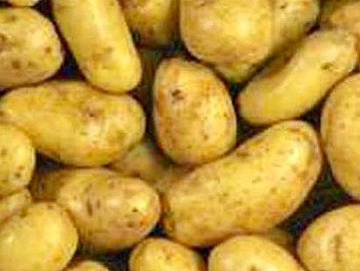 лучшие сорта картофеля с описанием для разных регионов, ветеран